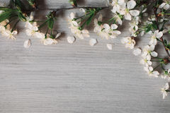 View from above . Frame of white spring flowers of cherry on a gray wooden background. White petals. The flat layout. flower composition Stock Photo