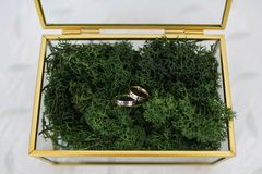 Glass box with golden brass edges filled with natural forest moss where two wedding bands are placed royalty free stock images