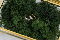 Glass box with golden brass edges filled with natural forest moss where two wedding bands are placed stock photo