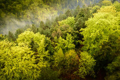 View from above of a green  large forest with Royalty Free Stock Photography