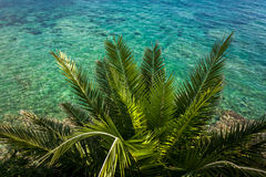 View from above on palm growing at sea with turquoise water Royalty Free Stock Photo