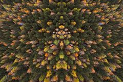 A view from above to the forest. A bird`s perspective on the autumn colours of the trees in the woods. stock image