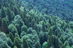 View from above to forested mountain slope Royalty Free Stock Photo
