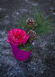 View from above on a vivit pink rose with branch of pine. Stock Image