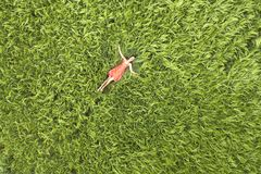 View from above of young attractive slim woman in red dress laying with closed eyes in green wheat field stock photos