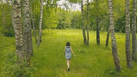 View from above young woman in forest. Smiling girl in birch grove. View from above young woman in forest. Drone view attractive young woman walking walking in Stock Image