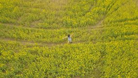 Young woman walking in a flower field. Summer yellow flowers in a field. View from above young woman walking in a flower field. Beautiful summer landscape with Royalty Free Stock Image