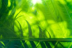 Green tropical plant for background. View of abstract green tropical plant for background Royalty Free Stock Images