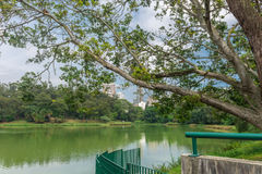 View of the Aclimacao Park nature in Sao Paulo stock photo