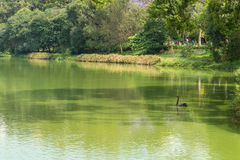 View of the Aclimacao Park nature in Sao Paulo Stock Image