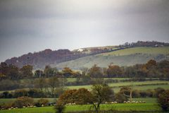 View across Wiltshire Countryside with Westbury White Horse Just Visible. Bucolic scene taken in Wiltshire England with sheep in the foreground and a distant Royalty Free Stock Image