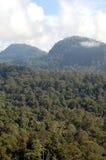 View Across the Dense Borneo Rainforest Stock Photo
