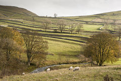 View across fields towards Malham Rakes in Yorkshire Dales Royalty Free Stock Image