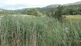 View across reeds toward Snowdonia stock footage
