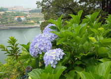 View across the river from a botanic garden Royalty Free Stock Photography