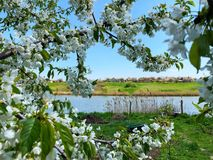 View across the river to the Ukrainian village. spring flowering of trees.  royalty free stock photo