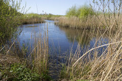 View across Somerset wetlands wildlife reserve. View of reeds, grasses and lake in the Somerset wetlands wildlife reserve in Somerset, UK stock photos