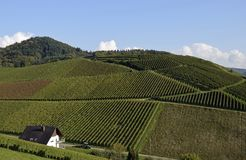 Durbach vineyards. View across Vineyards on a slope near Durbach Ortenau, Baden Germany Royalty Free Stock Photography