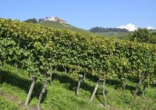 Castle in the  vineyards Royalty Free Stock Images