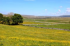 View across yellow fields to Ribblehead Viaduct Royalty Free Stock Photos