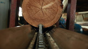 View from action camera of log moves on conveyor stock video footage