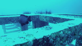 View from action camera of underwater world. Fishes scurry among metal cubes stock video footage