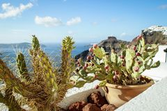 View of the Aegean Sea on the island of Santorini with flowering cacti stock photography