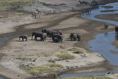 View of African landscape with elephants Royalty Free Stock Photo