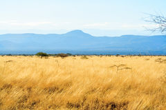 A view of african savannah. Half part of the photo is yellow and other part is blue stock photo