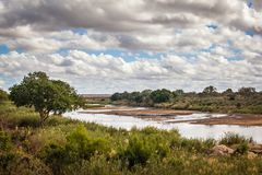 View of African Savannah. View of Sabie Sand River, Kruger National Park, South Africa Stock Photo