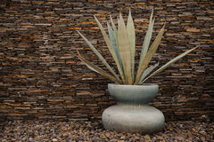View of agave americana plant in a vase. View of a agave americana plant in a vase on stone background stock photography