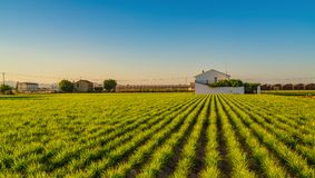 View of agricultural fields and buildings near Valencia before sunset. Spain.  royalty free stock photo