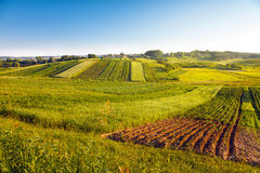 View of agricultural fields Royalty Free Stock Photography