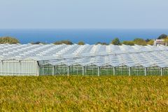 View of an agricultural greenhouses Royalty Free Stock Photos
