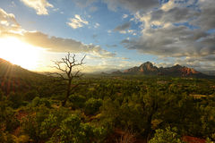View from Airport Vortex in Sedona, Arizona with cypress tree Stock Image
