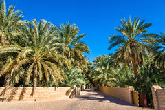 View of Al Ain Oasis Stock Photography