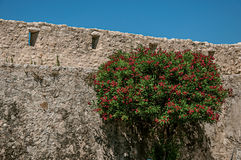 View of alley with stone wall and flowered bush in Saint-Paul-de-Vence. Stock Photography