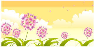 The view of Allium flower Stock Photography