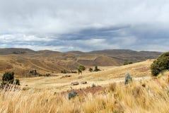 View along the Cusco-Puno Road, Peru Stock Image