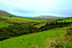 View along the Dingle Way. Beautiful view to Irish countryside Royalty Free Stock Image