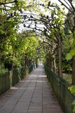 View along the verdant arch at Birdcage Walk in Bristol on May 13, 2019. One unidentified person. BRISTOL, UK - MAY 13 : View along the verdant arch at Birdcage royalty free stock photos