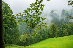 View of alpine meadow stock photography