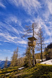 View of Alps mountains and pine tree forest. Spring in National Park Hohe Tauern, Austria. Stock Photos