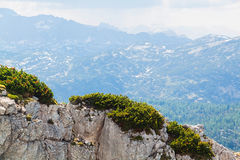 View on Alps, rocks with small pines and lake Hallstattersee from Krippenstein Plateau Stock Photos