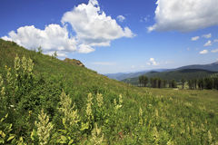 View Altai Mountains from the top of Tiyahty Stock Photos