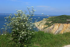 A view of Alum Bay. A view of the countryside overlooking Alum Bay on the Isle of Wight Stock Images