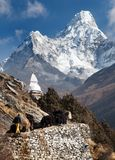 View of Ama Dablam with stupa and caravan of yaks Royalty Free Stock Photography