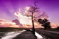 View of amazing purple sunset Stock Images