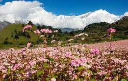 View from annapurna himal to dhaulagiri. Himal with buckwheat field stock image