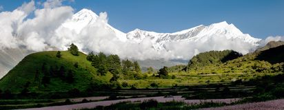 View from annapurna himal to dhaulagiri himal with buckwheat field Stock Image